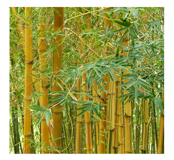 raw material fro bamboo biomass pellet mill