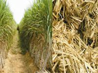 Make Biomass Pellets from Sugarcane Bagasse